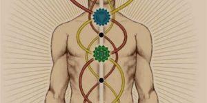 kundalini and the chakras yoga